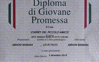 Diploma Giovane Promessa ENCI – Spitz Tedesco Nano