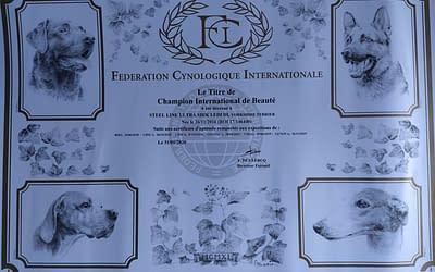 Diploma Campione Internazionale – Yorkshire Terrier