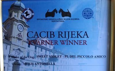 Diploma Campione Croato – Chihuahua