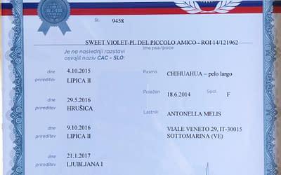 Diploma Internazionale Campione Slovenia – Chihuahua