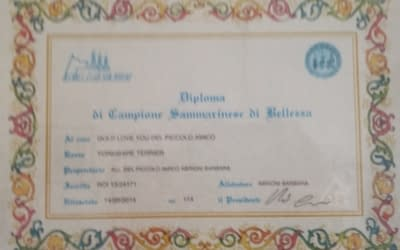 Diploma Campione Sammarinese- Yorkshire Terrier