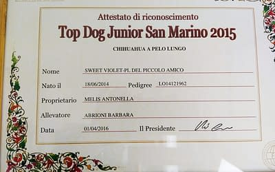 Top Dog Junior RSM 2015 – Chihuahua