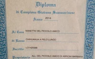 Diploma Campione Giovane Sammarinese- Chihuahua