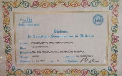 Diploma Campione Sammarinese – Yorkshire Terrier