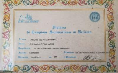 Diploma di campione italiano – Chihuahua a pelo lungo copia