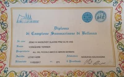 Diploma di Campione Sammarinese – Yorkshire Terrier