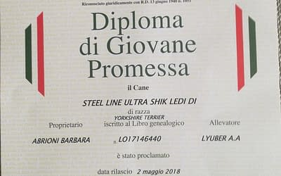 Diploma di Giovane Promessa ENCI – Yorkshire Terrier
