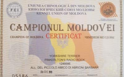 Diploma Campione Moldavo – Yorkshire Terrier