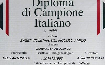 Diploma Campione Italiano- Chihuahua