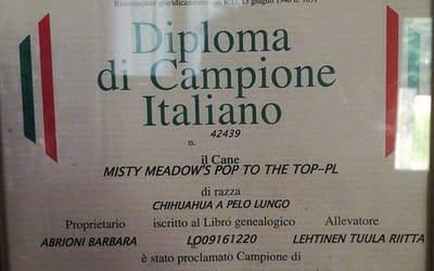 Diploma di Campione Italiano – Chihuahua a pelo lungo