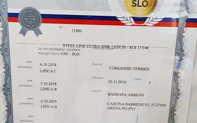 Diploma Campione Sloveno – Yorkshire Terrier