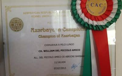 Campione Azerbaijan – Chihuahua a pelo lungo