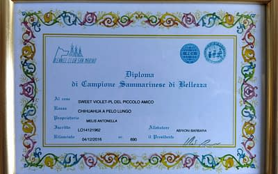 Diploma Campione Sammarinese – Chihuahua