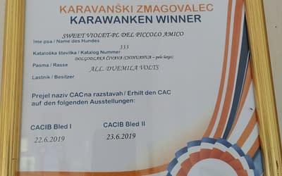Diploma Campione Slovenia – Chihuahua