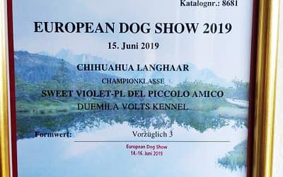 European Dog Show 2019 – Chihuahua