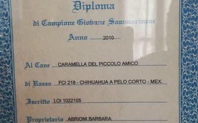 Diploma di campione italiano – Chihuahua a pelo lungo copia copia