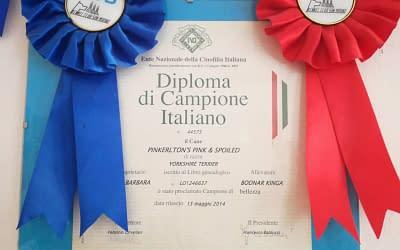Diploma di Campione Italiano – Yorkshire Terrier
