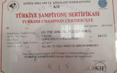 Diploma di Campione Internazionale Turchia – Chihuahua